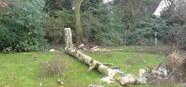 Baumpflege & -fällarbeiten